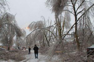 Ice Storm 2013 on Primrose